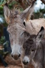 donkey, bonaire