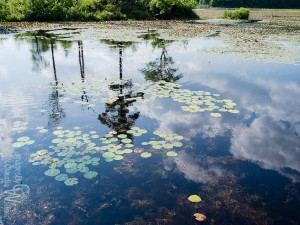 Reflections in Kittatinny Valley State Park