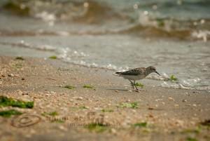 Sandy Hook, bird
