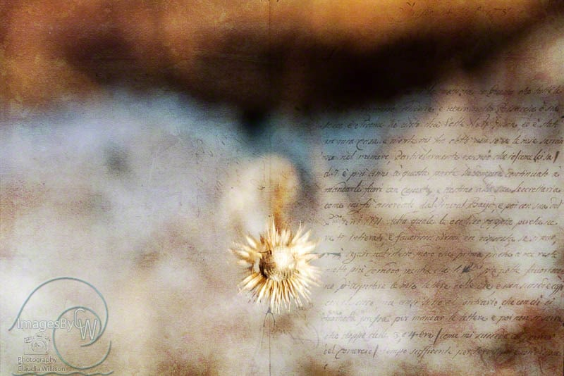 fine art friday, blog hop, romantic, script, lensbaby