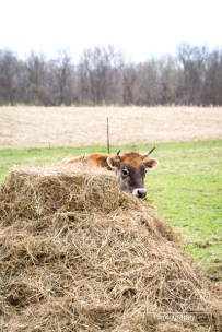 No one can find me behind this haystack.