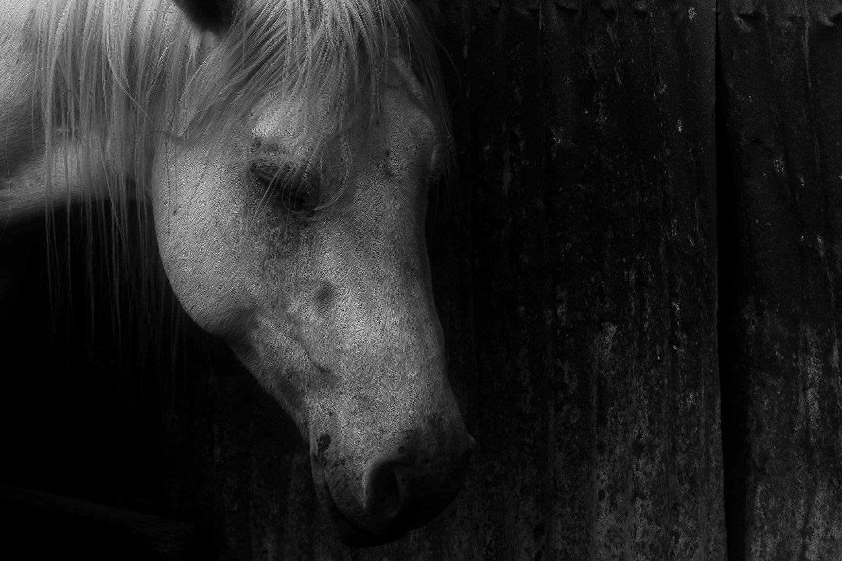 mouse mood horse photo