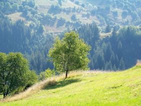 near the village of Gela / близо до село Гела