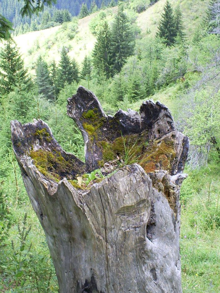 The old tree / Старото дърво Photo credit: Darldarl