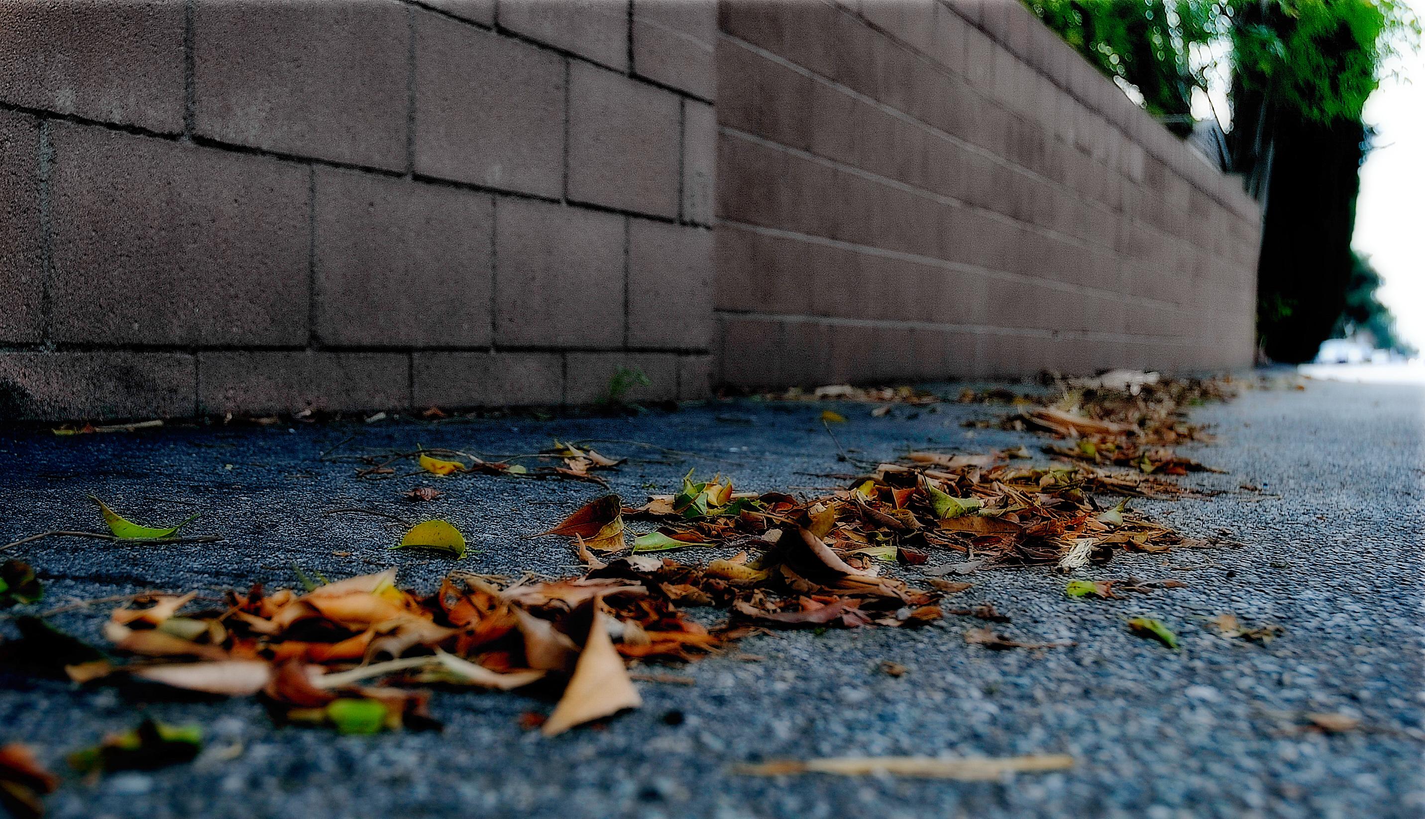 leaves-on-asphalt-srgb
