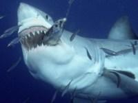 5700611-humains-versus-requins-le-bilan