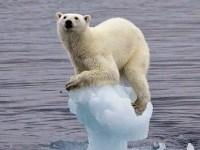 L'Arctique fond