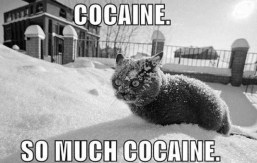 Coke cat freak, meme, 2010.