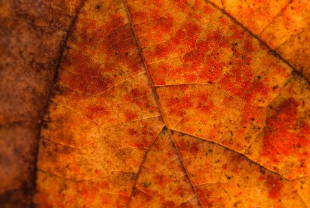 Abstract Leaf, Jones Point Park. Nikon D200, 60mm 2.8 AF Micro, ISO 400, f/8, 1/200 sec.