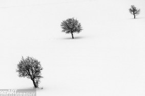 2016yds_sen6763 © LEVENT ŞEN