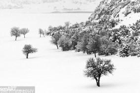 2016yds_sen6769 © LEVENT ŞEN