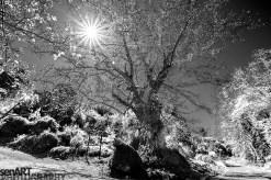 2017yds0409_SEN9122 © LEVENT ŞEN