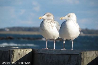 Blog-Seagull5