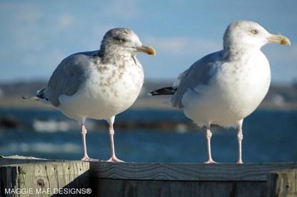 Blog-Seagull6