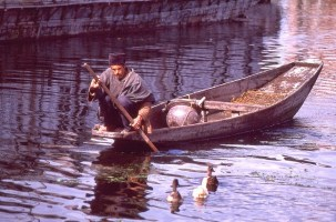 Daily Life in Vale of Kashmir, India, 1982 (6)
