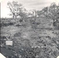 1871 Trail in 1963