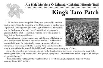 25-King's_Taro_Patch