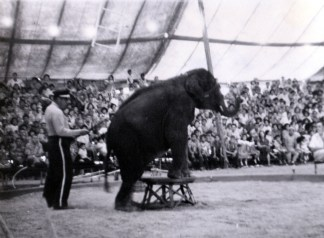 49th_State_Fair-elephant-(vic&becky-1954)