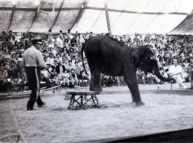 49th_State_Fair_elephant-(vic&becky-1954)