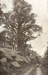 A_Road_To_The-Volcano-(Mid-PacificMagazine)-1913