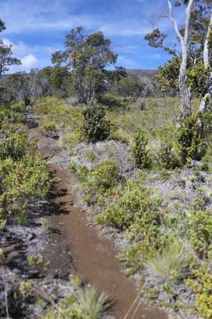 Ainapo-Trail-DLNR