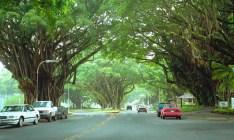 Banyan Drive