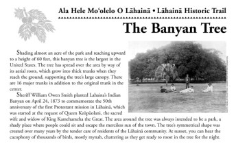 Banyan_Tree