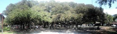 Banyan_Tree_Park_(8625010921)