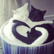 Cats-heart tails