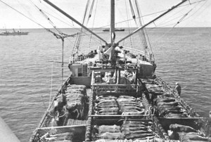 Cattle_on_Boat-PanioloPreservationSociety