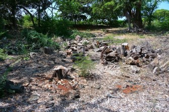 Clearing of invasive kiawe trees at Keolonahihi (Andy Bohlander)