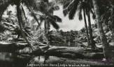 Coco-Palms-(kamaaina56)