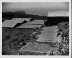Coffee Mills Plantations-PP-17-1-018-00001