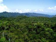 Laau ridge, Alakai region, Kauai