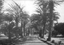 Date_Palm_Avenue,_Queen's_Hospital,_1899