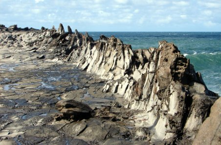 Dragons Teeth-marinebio
