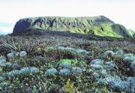Eke-West_Maui_Silversword-TNC