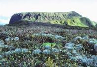 Eke-West_Maui_Silversword-TNC