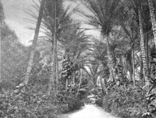 Entrance_to_Ainahau,_near_Honolulu,_residence_of_Princess_Kaiulani-1901