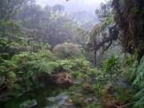 Forest-Ferns-Moss