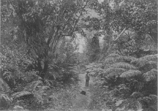 Forest_Scenery-Puna,-(WC)_c._1884