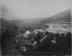 Hanalei-Valley-Rice_Fields-1890