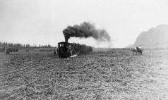 Hauling sugarcane to mill-(Smithsonian)