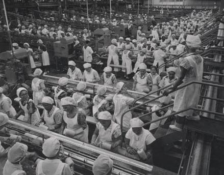 Hawaiian Pineapple Company Canning Lines, Honolulu, O'ahu, 1958