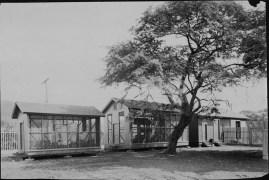Hawaiian Sugar Planters Association Experiment Station-PP-8-9-003-00001