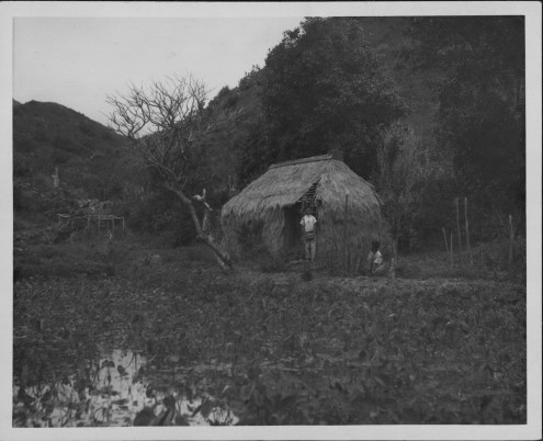 Hawaiians-grass_house-taro loi-PP-32-2-023