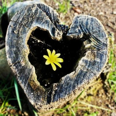 Hearts-in-Nature-part2-10