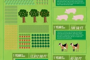 How Much Land Do We Need To Be Food Self-Sufficient?