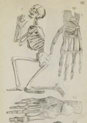judd-anatomia-page_081