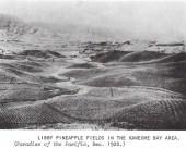 Kaneohe Pineapple Fields-1920